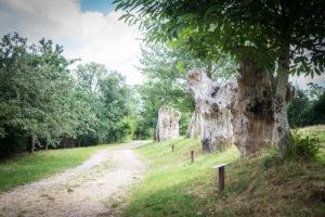 Reportage photos et vidéo pour la maison botanique à Boursay